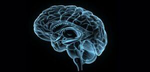 Approche neuroscientifique de la mindfulness – Quels impacts de la méditation sur votre cerveau ?